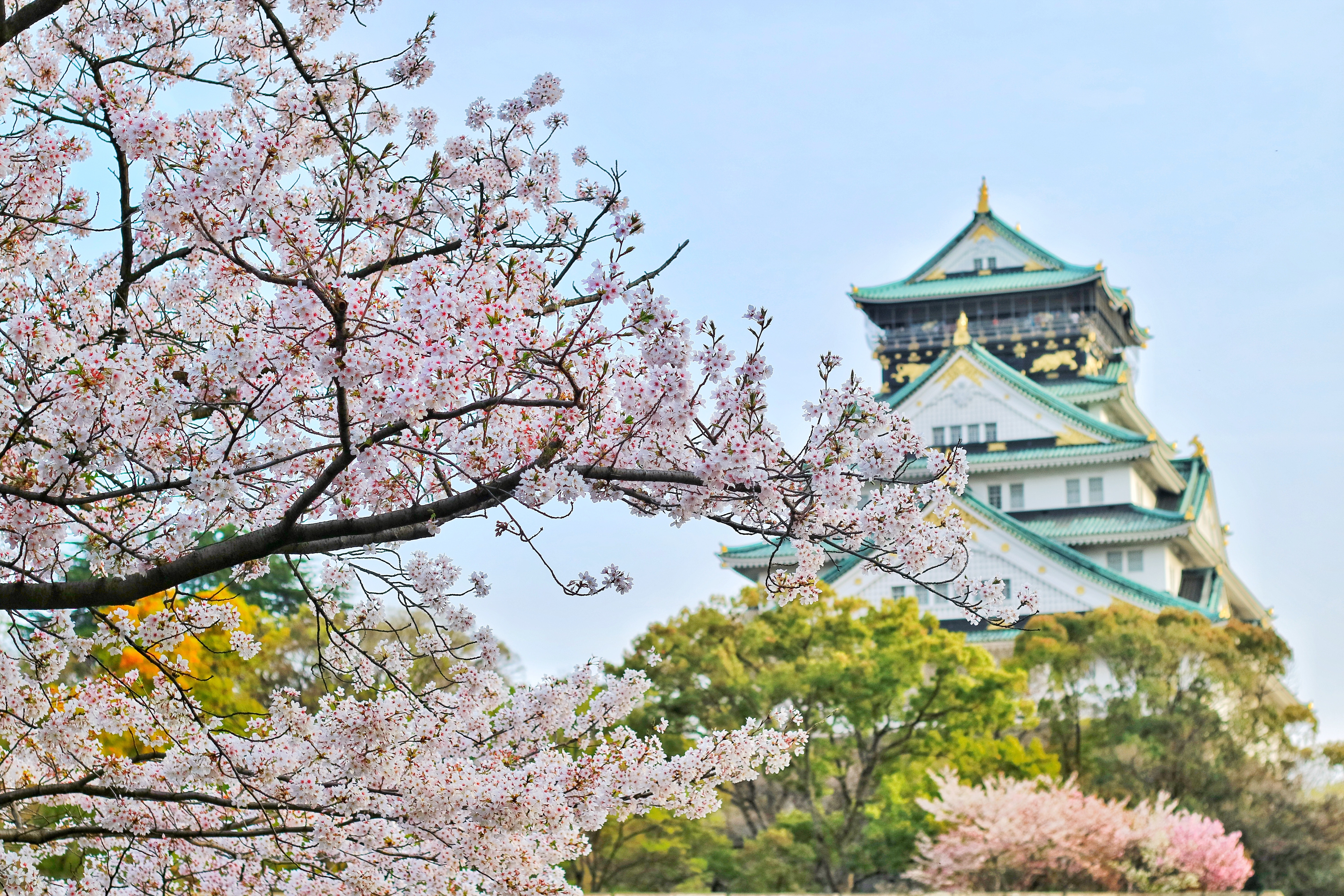 Studying In Japan As An Expat