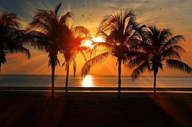 There is a beach, with several palm trees during the sunset, the scene that awaits all the students living in Tampa.