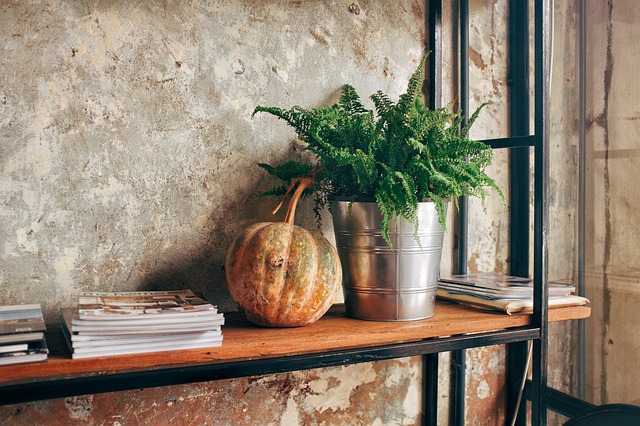 A shelf with some magazines, a pumpkin, and a plant.